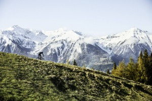 Zdjęcie ilustracyjne 05 (fot. BMC Switzerland)